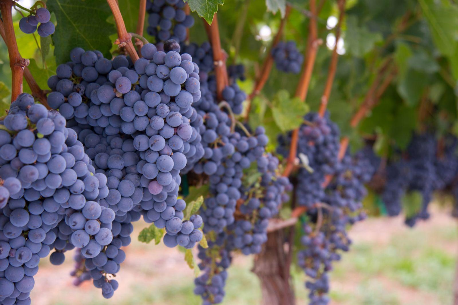Rượu Vang Tây Ban Nha: Tất tần tật những thông tin cần biết A-Z